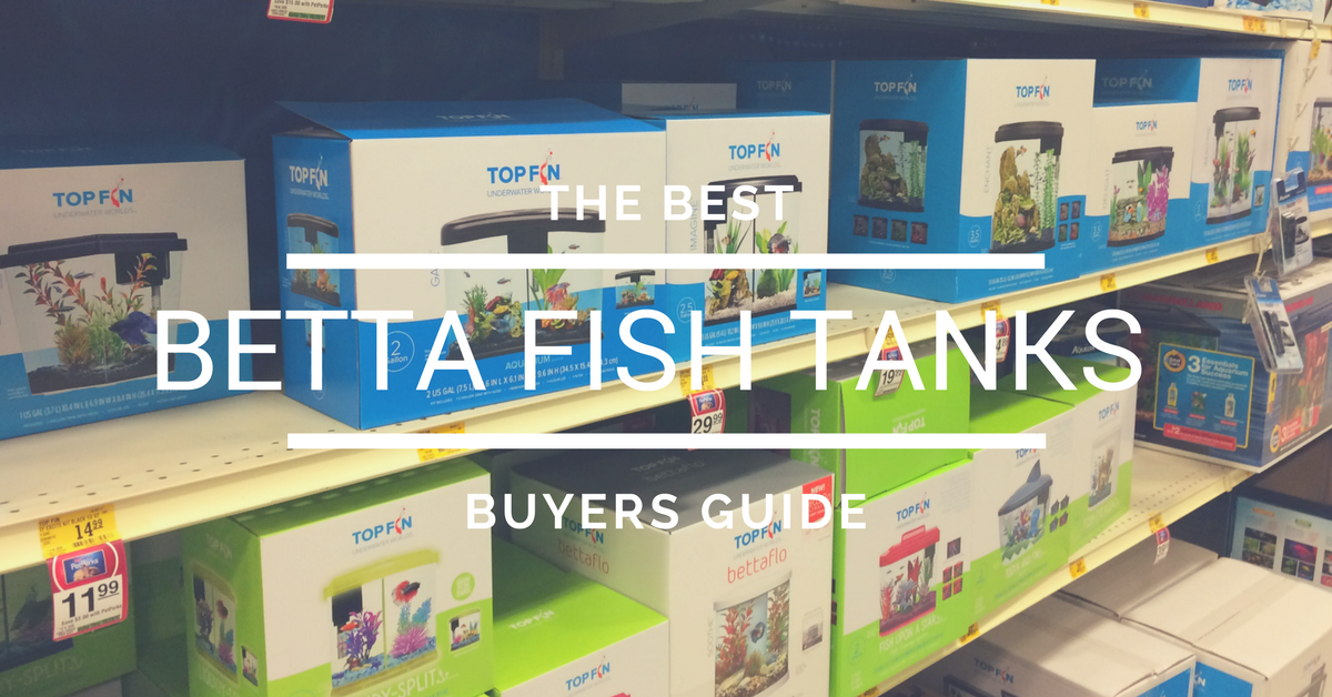 The best betta fish tanks by price 2017 buyers guide for Betta fish care guide