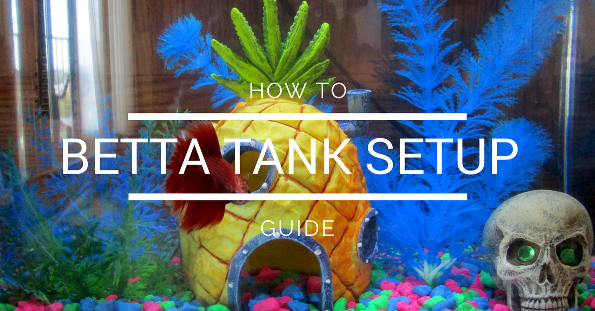 Betta Aquarium Setup In 4 Easy Steps Betta Answers